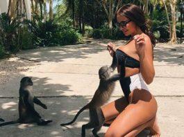 maymuni i tsitsi